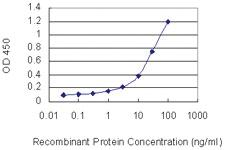 Anti-NXPH3 Mouse Monoclonal Antibody [clone: 4C8]