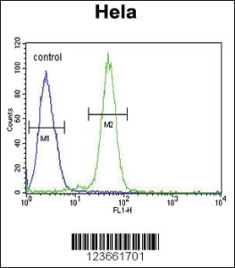 Anti-AGXT2 Rabbit Polyclonal Antibody