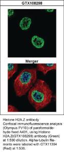 Anti-HCRT Rabbit Polyclonal Antibody