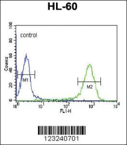 Anti-DCP2 Rabbit Polyclonal Antibody