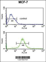 Anti-MRPS25 Rabbit Polyclonal Antibody