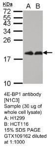 Anti-OR3A2/3A3 Rabbit Polyclonal Antibody