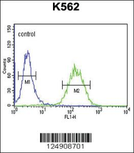 Anti-ACSBG2 Rabbit Polyclonal Antibody