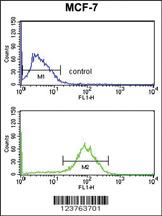 Anti-DSTN Rabbit Polyclonal Antibody