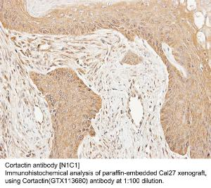 Anti-ZRANB1 Rabbit Polyclonal Antibody