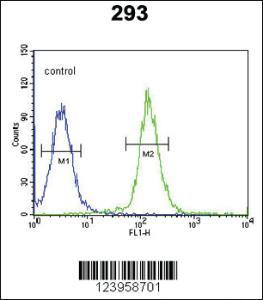 Anti-CDC45 Rabbit Polyclonal Antibody