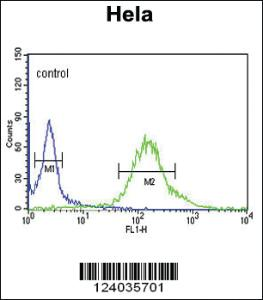 Anti-GTSE1 Rabbit Polyclonal Antibody