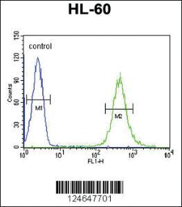 Anti-HOXA3 Rabbit Polyclonal Antibody