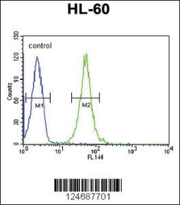 Anti-RGR Rabbit Polyclonal Antibody