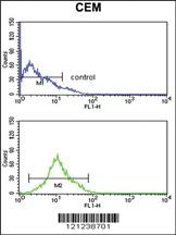 Anti-KCNJ11 Rabbit Polyclonal Antibody