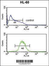 Anti-KIR3DL2 Rabbit Polyclonal Antibody