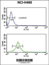 Anti-SDPR Rabbit Polyclonal Antibody
