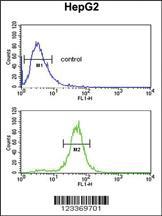 Anti-RERE Rabbit Polyclonal Antibody