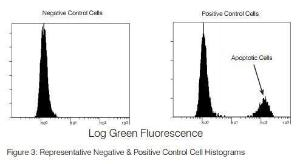 It is a sensitive two color TUNEL assay for detecting apoptotic cells by flow cytometry. Using this Kit cells are first labeled with Br-dUTP, followed by staining with a FITC anti-BrdU antibody to detect sites of incorporation. The kit contains sufficient reagents to measure apoptosis in 60 samples.