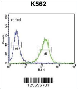Anti-DLL4 Rabbit Polyclonal Antibody