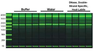 DNase, Double-Strand Specific, Heat-Labile treatment leaves RNA quality intact. RNA incubated with buffer, water or DNase were analyzed using the Eukaryote Total RNA StdSens Assay (Bio-Rad Experion System), with the results indicating all samples had intact, high quality RNA (RQI >8.5)