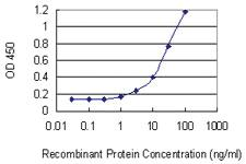 Anti-NUP50 Mouse Monoclonal Antibody [clone: 4H7]