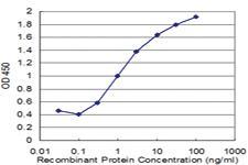 Anti-RABAC1 Mouse Monoclonal Antibody [clone: 2A4]