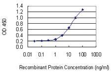 Anti-FAM65B Mouse Monoclonal Antibody [clone: 2F6-1A11]