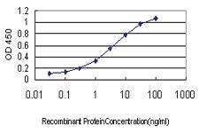 Anti-SCGN Mouse Monoclonal Antibody [clone: 2G7]