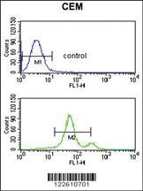 Anti-ACCN2 Rabbit Polyclonal Antibody