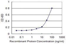 Anti-PAIP1 Mouse Monoclonal Antibody [clone: 2D11]