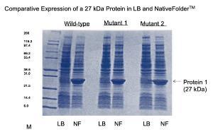 Bacterial cell culture medium