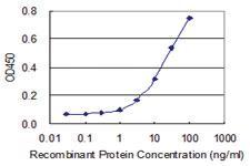 Anti-HS3ST2 Mouse Monoclonal Antibody [clone: 5D5]