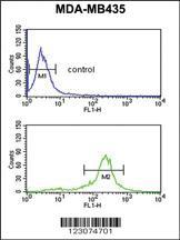 Anti-C19orf26 Rabbit Polyclonal Antibody