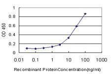 Anti-NR1D1 Mouse Monoclonal Antibody [clone: 4F6]
