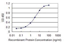 Anti-HEXIM1 Mouse Monoclonal Antibody [clone: 1H5]
