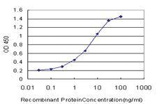 Anti-RBCK1 Mouse Monoclonal Antibody [clone: 3C3]