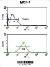 Anti-SNRPD3 Rabbit Polyclonal Antibody