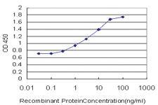 Anti-ARHGEF11 Mouse Monoclonal Antibody [clone: 2F4]