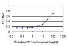 Anti-WDR4 Mouse Monoclonal Antibody [clone: 1F9]
