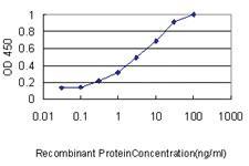 Anti-AKAP12 Mouse Monoclonal Antibody [clone: 1C5]