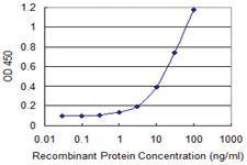 Anti-ARNT2 Mouse Monoclonal Antibody [clone: 3E12]