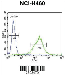 Anti-GABRA2 Rabbit Polyclonal Antibody