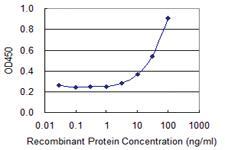 Anti-CD226 Mouse Monoclonal Antibody [clone: 4G8]
