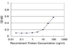 Anti-PNMA2 Mouse Monoclonal Antibody [clone: 4F10]