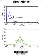 Anti-TFPT Rabbit Polyclonal Antibody