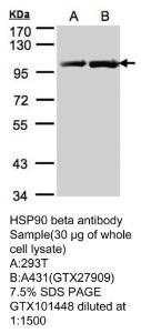 Anti-XPNPEP1 Rabbit Polyclonal Antibody