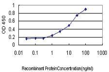 Anti-AKT3 Mouse Monoclonal Antibody [clone: 60]