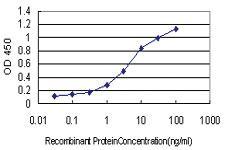 Anti-ABCG1 Mouse Monoclonal Antibody [clone: 2E11]