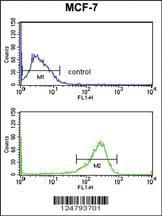 Anti-SELT Rabbit Polyclonal Antibody