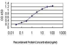 Anti-TCFL5 Mouse Monoclonal Antibody [clone: 1F2]