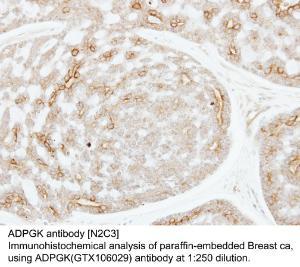 Anti-BHMT Rabbit Polyclonal Antibody