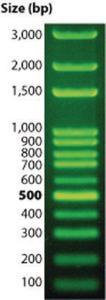 DNAmark™ DNA Plus Ladders, G-Biosciences