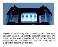 Figure 3: Supporting tray containing four DiaEasy™ Dialyzer tubes in a horizontal electrophoresis tank. The arrow on the cap is positioned face up and the two membranes of the DiaEasy™ Dialyzer tubes are in perpendicular to the electric field.