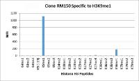 RM150 specifically reacts to Histone H3 monomethylated at Lysine 9 (K9me1).